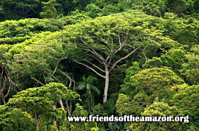 Contact Us at Friends of the Amazon